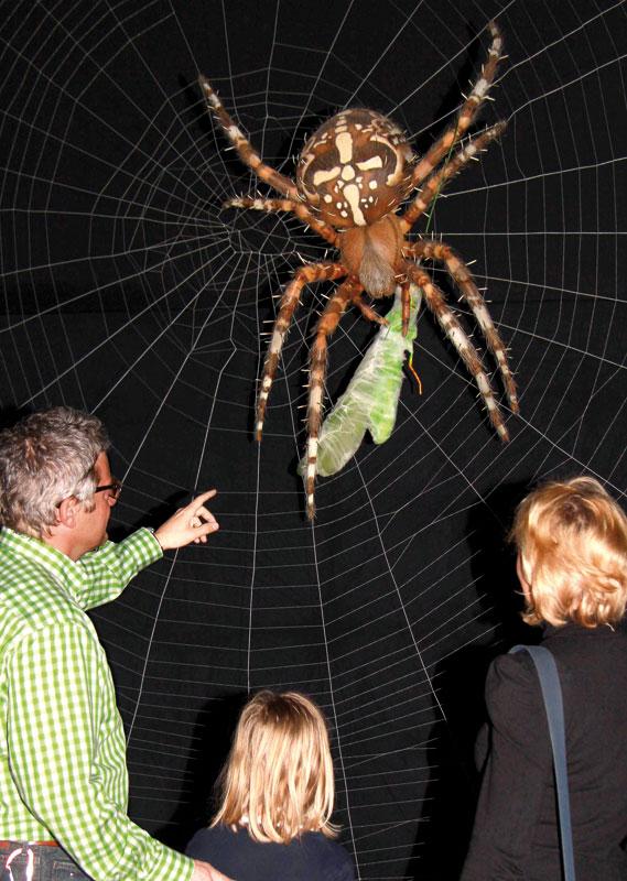 Die Größten Spinnen